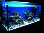 Основные элементы, применяемые при дизайне аквариумов