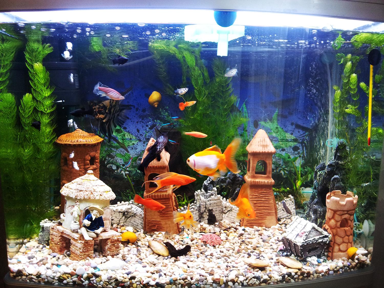 Как сделать рыбок дома 702